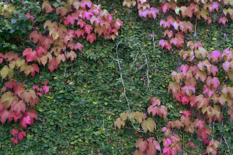 Fall-Oct