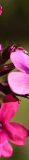 Flowerpillar